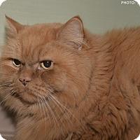 Adopt A Pet :: Thing 1 - Medina, OH