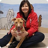 Adopt A Pet :: Buddy - Elyria, OH