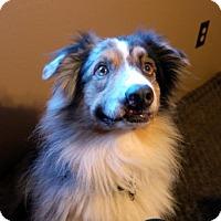 Adopt A Pet :: Dusty - Malakoff, TX