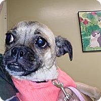 Adopt A Pet :: Sugar - Anaheim, CA