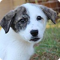 Adopt A Pet :: Napa - Foster, RI