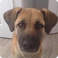 Adopt A Pet :: Meeka - Saskatoon, SK
