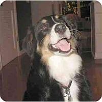 Adopt A Pet :: Emma - Orlando, FL