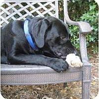 Adopt A Pet :: Mojo - Altmonte Springs, FL