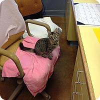 Adopt A Pet :: Emily Lickinson - Lake Charles, LA