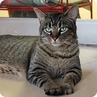 Adopt A Pet :: * Tucker - Monroe, NC