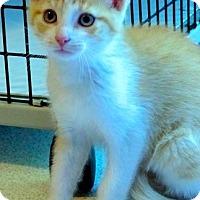 Adopt A Pet :: Romeo - Victor, NY