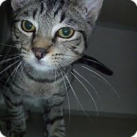Adopt A Pet :: Leonard - Hamburg, NY