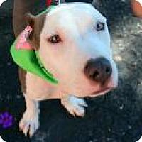 Adopt A Pet :: Mako - Gainesville, FL