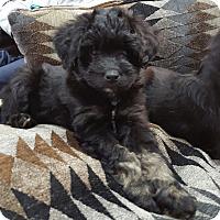 Adopt A Pet :: Tina Fey - Jersey City, NJ
