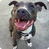 Adopt A Pet :: Judd - Mission Viejo, CA
