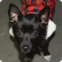 Adopt A Pet :: Blitzen - Meridian, ID