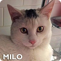 Adopt A Pet :: Milo - New York, NY