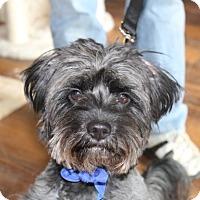Adopt A Pet :: Kipper - Potomac, MD