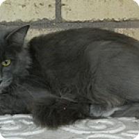 Adopt A Pet :: Royal - Columbus, NE