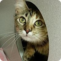Adopt A Pet :: Conti - Grayslake, IL