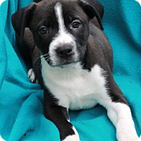 Adopt A Pet :: Reagan - Waldorf, MD