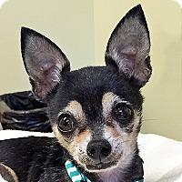Adopt A Pet :: Coco - Burlingame, CA