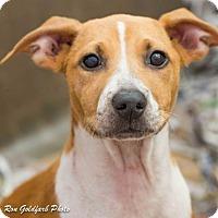 Adopt A Pet :: Carmel - Alpharetta, GA
