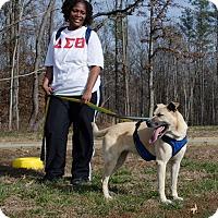 Shepherd (Unknown Type) Mix Dog for adoption in Midlothian, Virginia - Nevaeh
