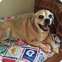 Adopt A Pet :: Hazel - Flower Mound, TX