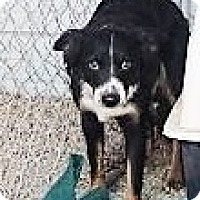 Adopt A Pet :: Pup - Monte Vista, CO