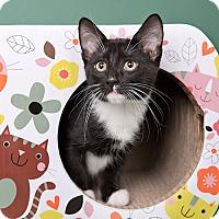 Adopt A Pet :: Target - Wilmington, DE
