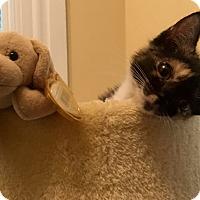 Adopt A Pet :: Willow - Horsham, PA