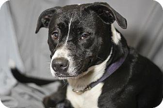 Border Collie/Labrador Retriever Mix Dog for adoption in Pensacola, Florida - Mizzy
