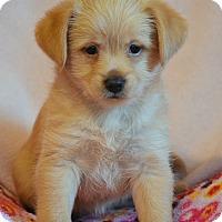 Adopt A Pet :: Everly - Staunton, VA