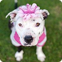 Adopt A Pet :: Journey-ADOPT Me! - Redondo Beach, CA
