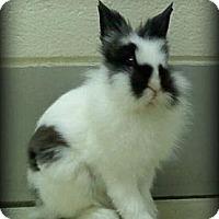Adopt A Pet :: Caleb - Williston, FL