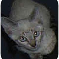 Adopt A Pet :: Alaska - Dallas, TX