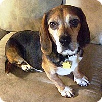 Adopt A Pet :: Robbie - Novi, MI