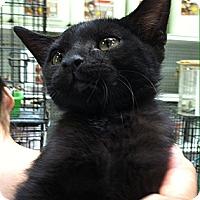 Adopt A Pet :: Sooty - Santa Monica, CA