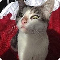 Adopt A Pet :: Elle - Brooklyn, NY