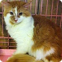 Adopt A Pet :: Goldie - Hudson, NY
