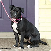 Adopt A Pet :: Cleo - Marietta, GA