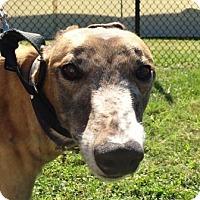 Adopt A Pet :: Bristol Drive - Longwood, FL