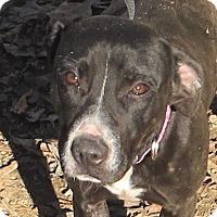 Adopt A Pet :: Leia - please give me a chance - Allentown, PA