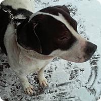 Adopt A Pet :: Chase - Clear Lake, IA