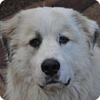 Adopt A Pet :: Elliot - Atlanta, GA