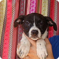 Adopt A Pet :: Millie - Oviedo, FL