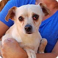 Chihuahua Mix Dog for adoption in Las Vegas, Nevada - Patrick
