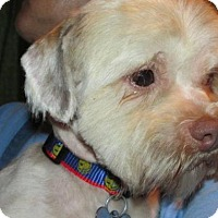 Adopt A Pet :: Ivy - Rocky Mount, NC