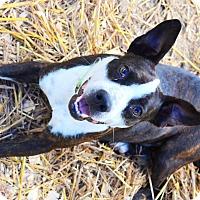 Adopt A Pet :: johva - Centerville, TN