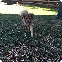 Adopt A Pet :: Lulu - Charlotte, NC