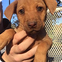 Adopt A Pet :: Karen - Grafton, WI