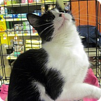 Adopt A Pet :: Button - Overland Park, KS