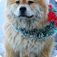 Adopt A Pet :: Nahla - South El Monte, CA